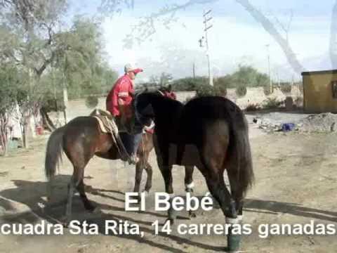 Caballos de Cuadra Santa Rita Venado SLP