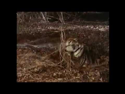 Robinson Crusoe Quicksand Scene