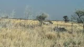 Rhino mzani south africa