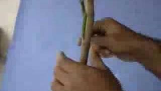 Veneer grafting
