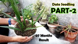 DATE SEED GERMINATION - How to Grow Date Palm Tree from Seed - Date Palm Plant - Sprouting Seeds