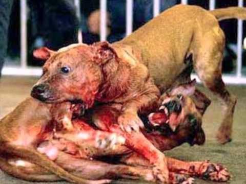 maltrato de perros