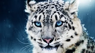 Awesome Animals HD 1080p & 3D