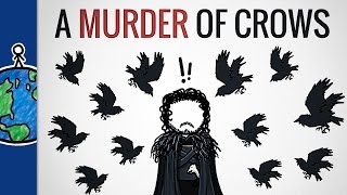 """Why Is A Group Of Crows Called A """"Murder""""?"""