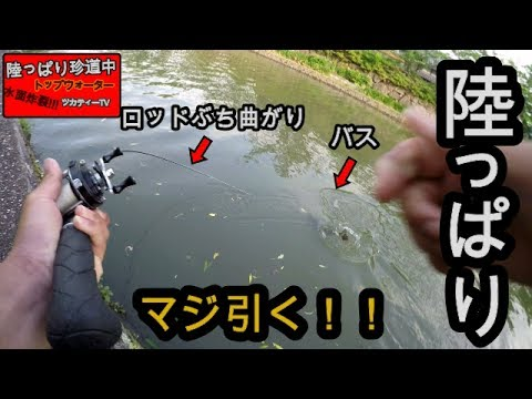 Xxx Mp4 【バス釣り】よっしゃーバケモン釣ったぞー!おかっぱりTOPで釣れる鉄板アクションとポイント!! 3gp Sex