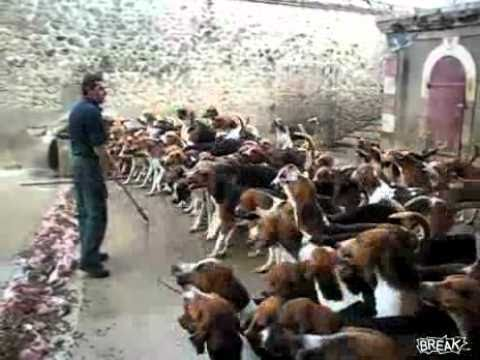 How To Feed 100 Dogs At OnceVideo