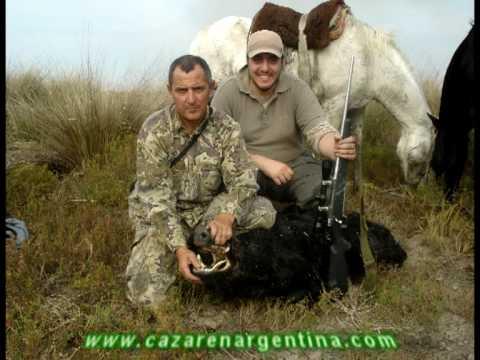Hunt Wild Boar in Argentina Caza de Jabali en Argentina cazarenargentina