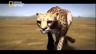 وثائقي انا وحش الفهد الصياد ناشيونال جيوغرافيك