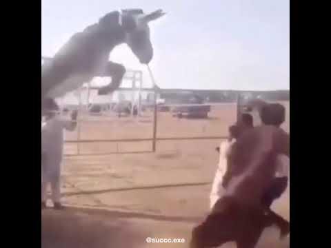 Xxx Mp4 Fucking Indian Slaves Get Killed By Donkey 3gp Sex