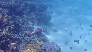 Red Sea Big Fish