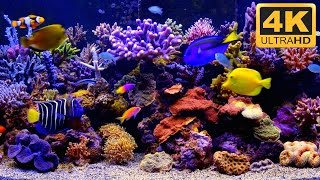 ***** THE BEST 4K Aquarium Video *****