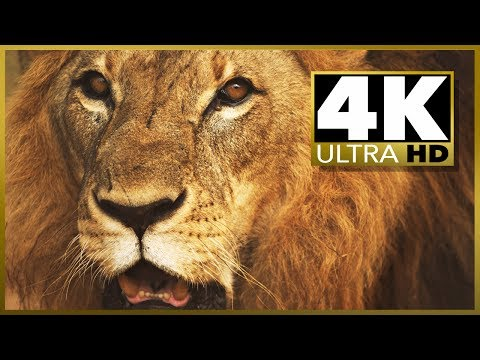 Xxx Mp4 4K ULTRA HD SAMPLER Video Resolution Test Stock Video HD Vs 4k 3gp Sex