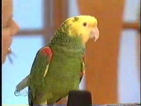 Ellen DeGeneres & Quito the parrot