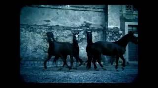 【HD】马克西姆 Maksim - 《出埃及记  Exodus》