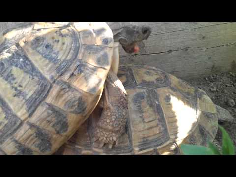 Xxx Mp4 Turtle Sex 2013 FULL HD 3gp Sex