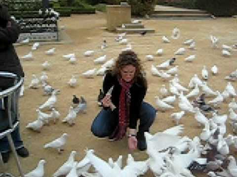 Attack of the White Pigeons