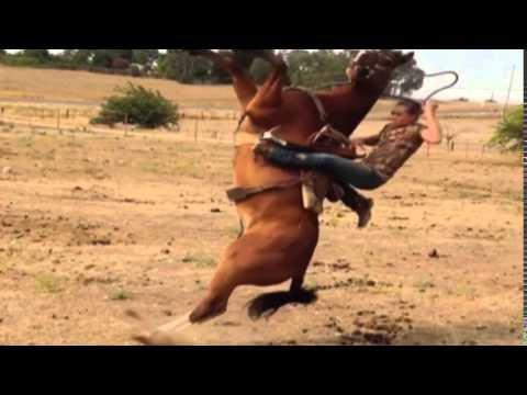 Xxx Mp4 Horse Falls And Knocks Woman Off 3gp Sex