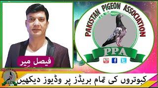 Ustad Hamayon Kay Khalifa Nauman Butt From Gujranwala Watch In HD Urdu/Hindi