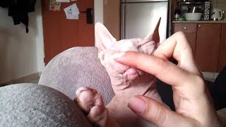 Woman Replaces Her Boyfriend With A Hairless Cat, And She's Never Been Happier