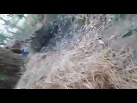 Xxx Mp4 Rambabu Sahu Sex Video Uchhal 3gp Sex