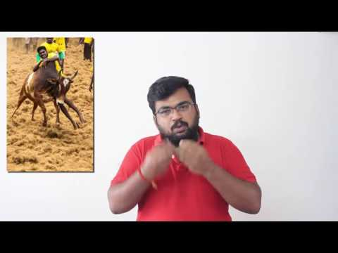 How can we save jallikattu and our native bulls ?