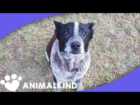 Cattle dog leads rescuers to lost little girl