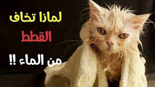 لماذا تخاف القطط من الماء  !!!
