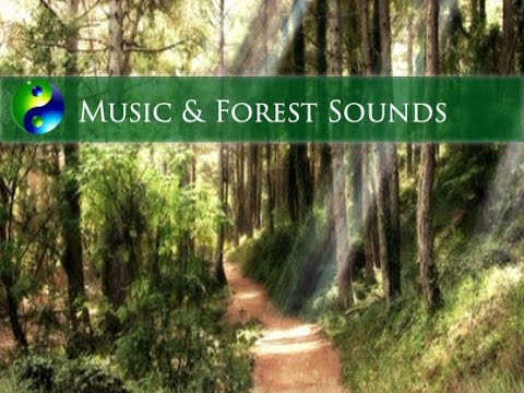 Relaxing Music with forest sounds; Meditation Music; New Age Music; Yoga Music; Spa Music; Relax