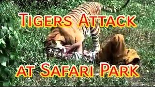 Tigers try to Attack @ Safari Park Gazipur   Rians Studio