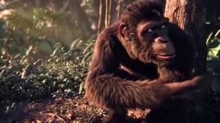 Zingat sairat  monkey