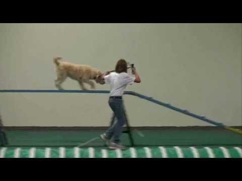4-H Dog Agility: Level 1 Pre-beginning Agility B Example 1