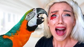MACAW PARROT BIT MY EYE PRANK! (911 Almost Called!) | Nicole Skyes