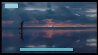 Raees Trailer - Shakib Al Hasan In As Raees