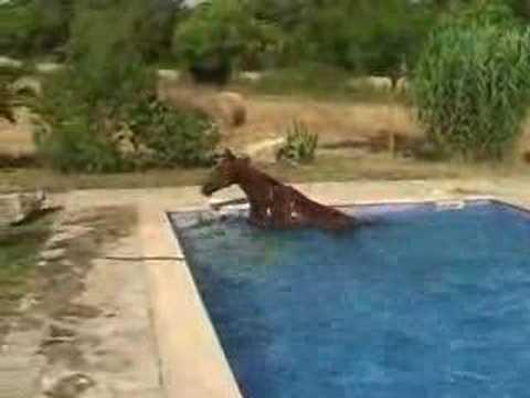 horse in pool mallorca