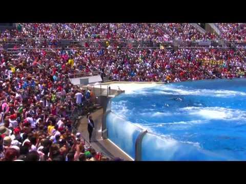 Seaworld SHAMU Killer Whale Show