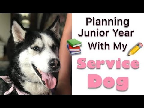 Xxx Mp4 SERVICE DOG IN HIGH SCHOOL 3gp Sex