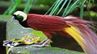 اجمل الطيور بالعالم