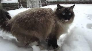 Snow Cat Ugo