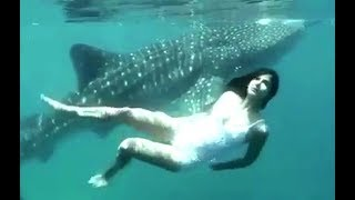 Katrina Kaif Underwater Swimming With Whale Shark - Video