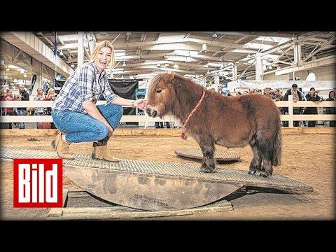 "Annica Hansen macht Horse-Agility mit Pony ""Johnny"""