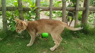 खिलाडी बिल्ला। Khiladi Billa. Billa  in action.