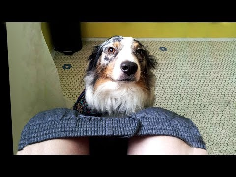 Why Dogs Follow You Into The Bathroom & Other Strange Behaviors Explained