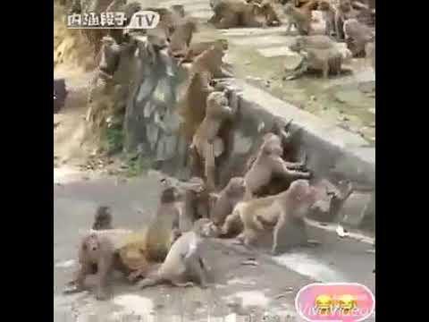 Xxx Mp4 Bandar Ki Chudai 3gp Sex