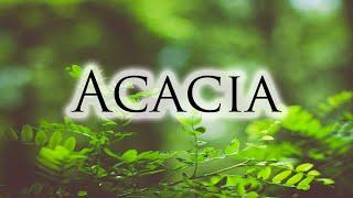 Herbs, Roots & Resins - Acacia