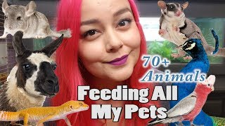 Feeding All My Pets, Over 70 Animals | Daily Feeding Routine