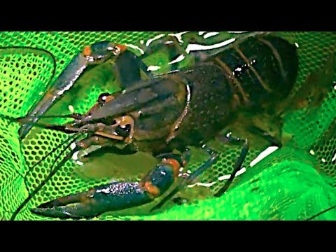 How to catch YABBIES and have fun!