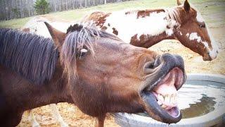 NOISY PETS ★ Animals Making FUNNY NOISES [Funny Pets]