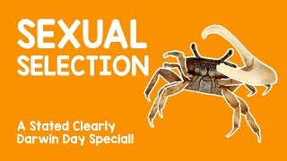 Darwin Day Special! What Is Sexual Selection?