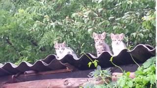 Суровые коты ДОНБАССА!!!
