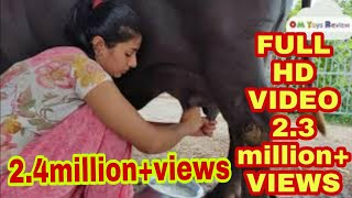 Buffalo milking village life vlogs..